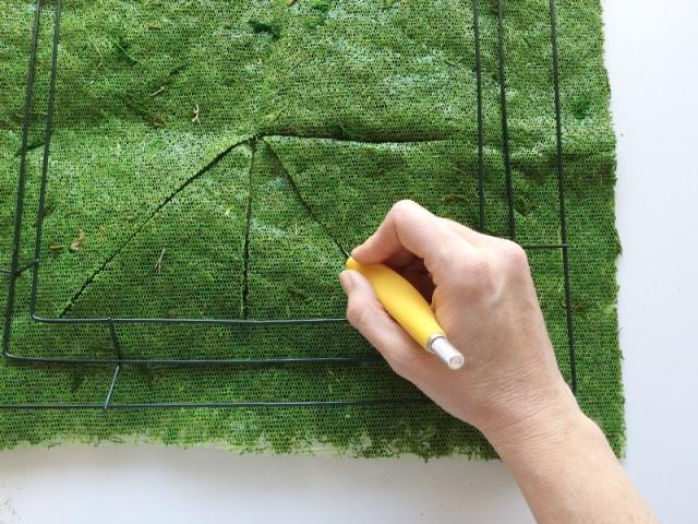 cut moss